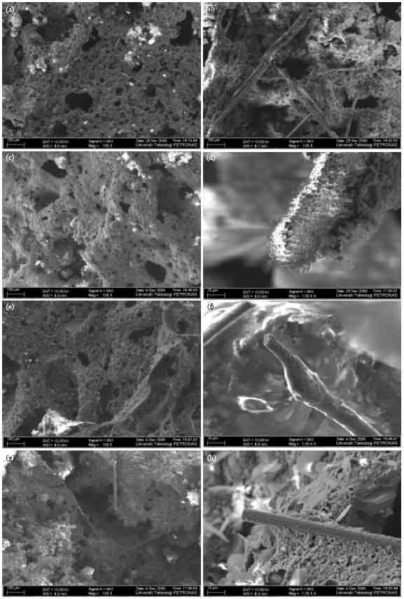 Image for - Study on the Fibre Reinforced Epoxy-based Intumescent Coating Formulations and their Char Characteristics