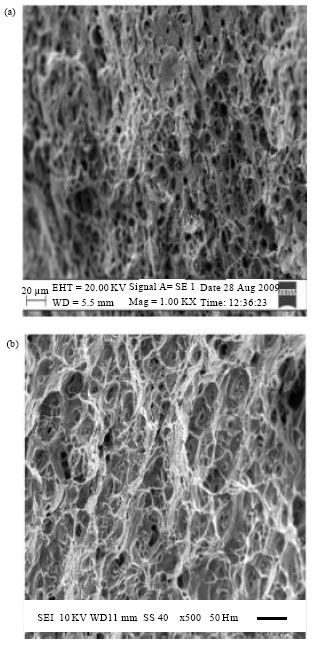 Image for - Effect of Ageing on Mechanical Properties of Dissimilar Friction Stir Welded Aluminum Alloy (AA2024 and AA6351) Joints