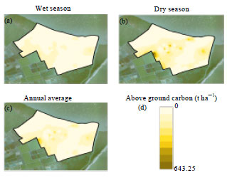 Image for - Above Ground Carbon Sequestration in Mangrove Forest Filtration System