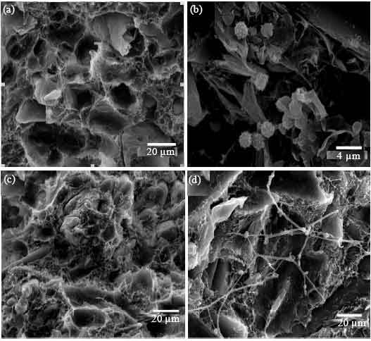 Image for - Mold Resistance and Water Absorption of Wood/HDPE and Bamboo/HDPE Composites