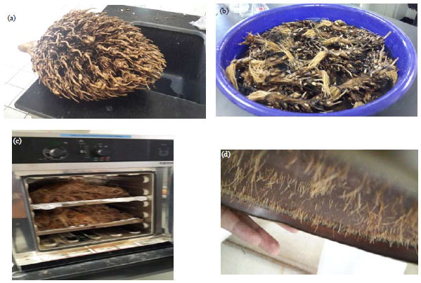 Image for - Parametric and Adsorption Kinetic Studies of Reactive Black 5 Removal from Textile Simulated Wastewater Using Oil Palm (Elais guineensis) Empty Fruit Bunch