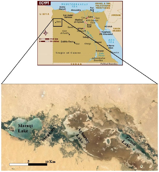 Image for - Chemical Composition and Antimicrobial Activities of Cyanobacterial Mats from Hyper Saline Lakes, Northern Western Desert, Egypt