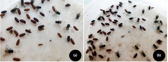 Image for - Larvicidal Activity and Bio-efficacy of Some Products Against Larvae of the Housefly, Musca domestica (L) (Diptera: Muscidae)