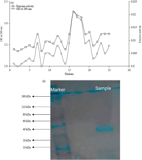 Image for - Production and Purification of Keratinase Enzyme from Serratia sp. Isolated from Poultry Wastes