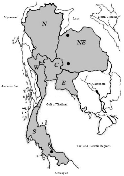 Image for - Genetic Relationships of Cercopithecidae in Thailand as Inferred from rDNA ITS Regions