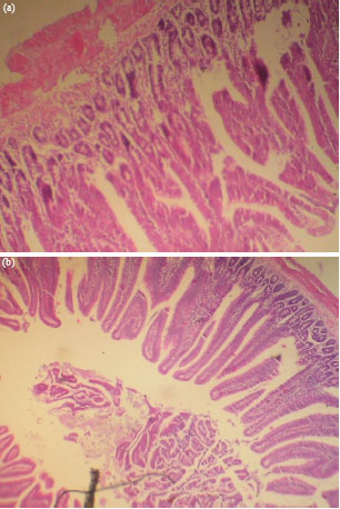 Image for - Effect of a Long Term Consumption of a Diet Supplemented with Leaves of    Gongronema latifolium Benth. on Some Biochemical and Histological Parameters    in Male Albino Rats