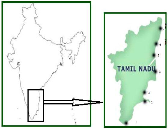 Image for - Distribution and Abundance of Gelatinous Zooplankton along Tamil Nadu Coastal Waters