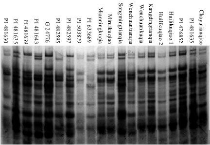 Image for - Genetic Diversity of Storage Proteins in Cultivated Buckwheat