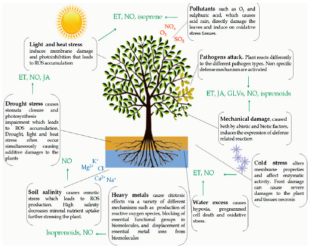 Image for - Ecophysiological Responses to Stresses in Plants: A General Approach