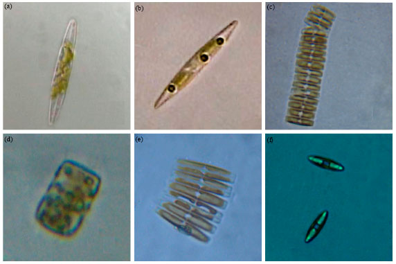 Image for - Biodiversity and Molecular Evolution of Microalgae on Different Epiphytes and Substrates