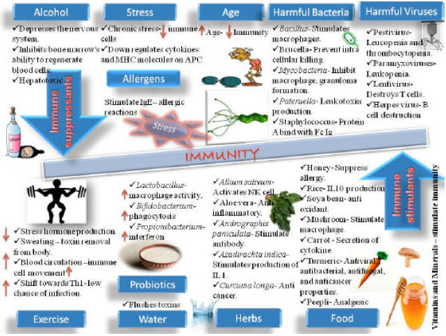 Image for - Immunomodulators in Day to Day Life: A Review