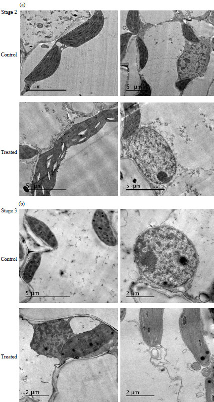 Image for - Seed Dressing Affect Protein, Antioxidant Enzymes, Ultrastructure, Soil Properties and Microflora of Maize and Wheat Seedlings