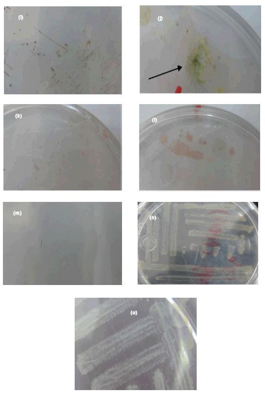 Image for - Cyanobacteria in Biological Soil Crust of Chadormalu Area, Bafq Region in Central Iran