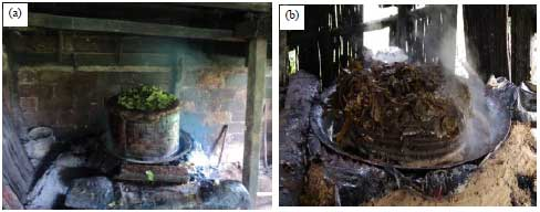 Image for - Mangampo: A Traditional Method from West Sumatra to Extract Gambir from Uncaria gambir