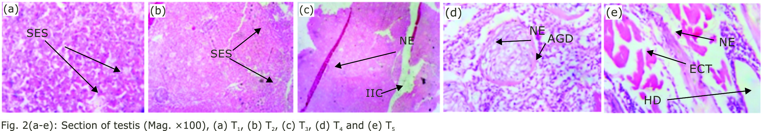 Image for - Effect of Martynia annua (Devil's Claw) Leaf Meal on the Reproductive and Growth Performance of Oreochromis niloticus (Nile tilapia)