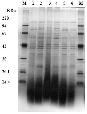 Image for - Impact of Gamma Irradiation Stresses II. Control of Sugarbeet Pathogens Rhizoctonia solani Kuhn and Sclerotium rolfsii Sacc.