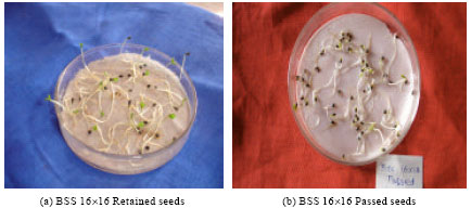 Image for - Standardization of Sieve Size for Grading of Olitorius Jute Seeds