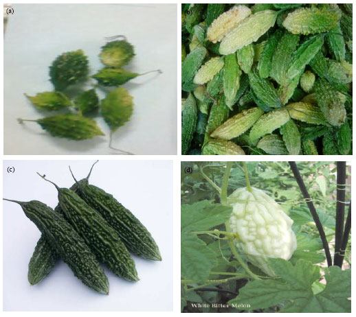 Image for - Nutrient and Phytochemical Analysis of Four Varieties of Bitter Gourd (Momordica charantia) Grown in Chittagong Hill Tracts, Bangladesh