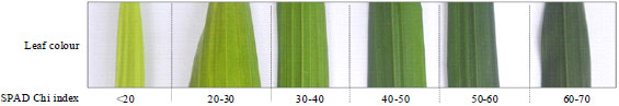 Image for - Rapid Determination of Leaf Chlorophyll Concentration, Photosynthetic Activity and NK Concentration of Elaies guineensis Via Correlated SPAD-502 Chlorophyll Index